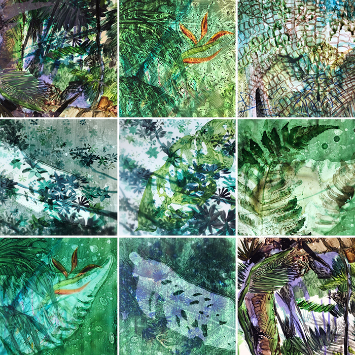 amazon rainforest plants collage. amazon layers date u003e february 2016 media mixed on drafting paper status inconclusive rainforest plants collage